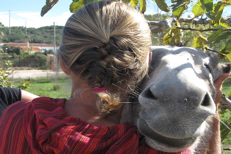 One human head an one donkey head exchanging hugs